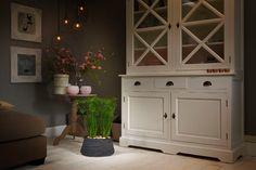Waterpret in huis met de #mini-vijver Trendy Pond Indoor van #Velda. Water- en moerasplanten, maar ook kunst- en kamerplanten voelen er thuis.