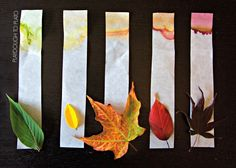 Leaf Chromatography - Playdough To Plato. Great science experiment for our leaf unit! Science Projects For Kids, Cool Science Experiments, Kindergarten Science, Elementary Science, Science For Kids, Learn Science, Summer Science, Math Projects, School Projects