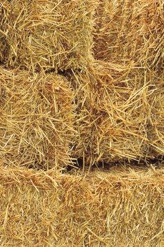 Straw Bale Gardening-Washington State University