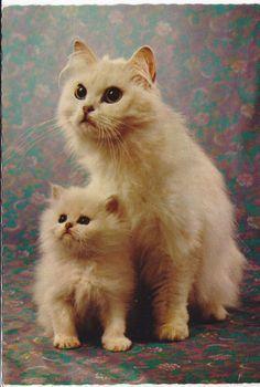 cat postcards 80s - Google Search