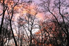 trees without leaves - Google Search