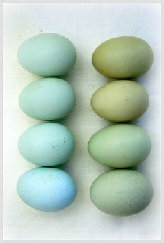 Dyed easter eggs in shades of blue and green. Colour Schemes, Color Combos, Aqua, Teal, Light Turquoise, Cobalt Blue, Duck Egg Blue, Duck Eggs, Robin Egg Blue