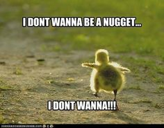 It'd be funnier if this was a baby chick. I've never once eaten a ducklin' nugget!