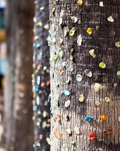 Gum Trees, by Backyard Photo ... At first glance, I thought these were beaded trees using wire and crystals which would also be very cool.