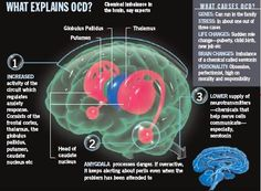 How the brain affects OCD-Obsessive Compulsive Disorder