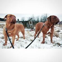 koiralle.fi facebook-sivuilla koiraystäväni kuvakisa, jossa palkintona mahtava koiratarvikepaketti.#kuvakisa #dogchallange #please #vote