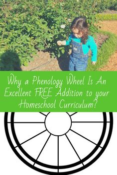 Nature study is an increasingly popular trend among homeschoolers. A phenology wheel is a perfect addition for homeschoolers to create a beautiful space to see what they're learning Montessori Resources DIY Monte Montessori Activities, Science Activities, Stem Science, Science Projects, Science Curriculum, Homeschool Curriculum, Creative Teaching, Teaching Kids, Nature Study