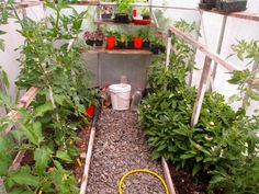 """If you love to garden, the thought of owning your own greenhouse has likely crossed your mind from time to time. Many gardeners, after daydreaming about it for a while, simply shrug this thought aside. """"It's too costly,"""" some think. """"Too hard to manage,"""" say others. Still, others simply view it as o"""