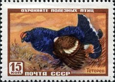 black grouse on stamps - Google Search