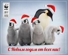 Отправьте новогоднюю открытку и помогите природе!