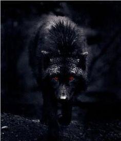 Me he convertido en lobo que persigue a su presa ahora deje ser un siervo ahora soy la bestia que busca la oscuridad de la noche: