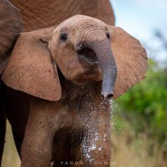 Elephant Family, Elephant Love, Cute Baby Animals, Animals And Pets, Beautiful Creatures, Animals Beautiful, Baby Elefant, Elephants Photos, Delta Girl