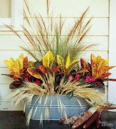 Utilize a metal tub as a fall planter for in-season plants. This arrangement comprises fountaingrass, Miscanthus sinensis 'Autumn Light', Cyclamen spp., croton (Codiaeum spp.), and wheat stalks.