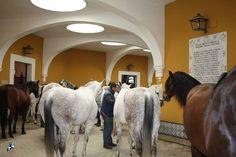Real Escuela Andaluza De Arte Equestre