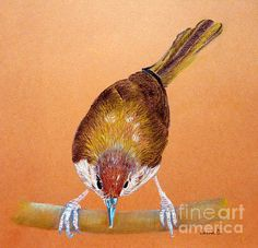 Feature on Poetic Poultry! http://fineartamerica.com/groups/poetic-poultry-.html