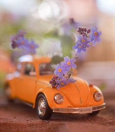 Hand Photography, Romantic Moments, Cool Pictures, Vehicles, Miniature, Bee, Cars, Pictures, June
