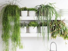 All About Indoor House Plants With name and pictures flowering plants, terrace plants, office plants and all kinds of details. Outside Plants, Outdoor Plants, Outdoor Gardens, Cool Plants, Air Plants, Potted Plants, Plantas Indoor, Deco Zen, Cactus Planta