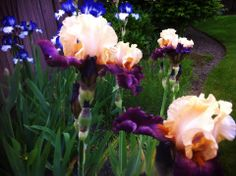 Spring is near! #snoqualmieflowers #snoqualmieridge http://www.realfx.com/snoqualmie-ridge.php
