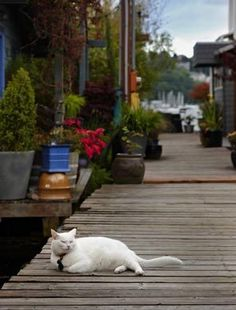 houseboat community with lovely cat (technically not a garden, but so sweet!)