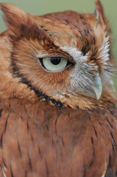 @Hayley Doran I don't know why, but this owl really reminds me of you.