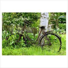 Garden & Plant - Old bicycle leaning against rustic wooden bench