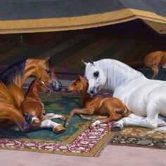 The undying love of the Arabian horse family