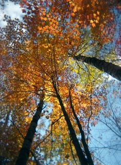 Ahh fall...love the time of year when the trees are beautiful with orange and red leaves!