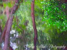 Reflected Trees by Toni Allen Abstract Photography, Nature Photos, Hdr, Shrubs, Reflection, Trees, Wall Art, Plants, Painting