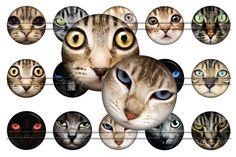 Cat's look  Digital