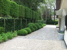 Fascinating Evergreen Pleached Trees for Outdoor Landscaping 57 - Haus und Garten - Outdoor Landscaping, Outdoor Gardens, Outdoor Trees, Outdoor Decor, Design Jardin, Contemporary Garden, Garden Spaces, Dream Garden, Garden Inspiration