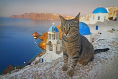 Santorini kitty.  There are kittens/cats all over the town. Most of them seem to be sweet Tabbys, just sunning themselves everywhere.