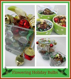 Flowering Holiday Bu