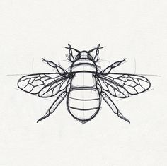 Sketched-style lines bring this bee design alive on pillows T-shirts and more. - Awsome Shirts - Ideas of Awsome Shirts - Sketched-style lines bring this bee design alive on pillows T-shirts and more. Tattoo Sketches, Tattoo Drawings, Drawing Sketches, Art Drawings, Bugs Drawing, Unique Drawings, Embroidery Designs, Hand Embroidery, Bee Sketch