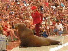 Walrus dancing on MJ.