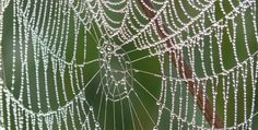 I stumbled upon cobwebs