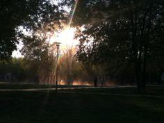 Light through the trees in Paris.