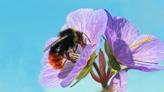 Nejoblíbenější kompot? Utopenci! Máme recept na ty nejlepší – Hobbymanie.tv Bees And Wasps, Busy Bee, First Night, Animals, Beetles, Snails, Tv, Bumble Bees, Carpenter Bee