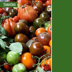 Tomates: 3 molhos e muitas dicas sobre esse fruto especial