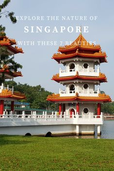 Explore the Nature of Singapore with these Six Beauties and go outside to see the very best of this popular Southeast Asian country.
