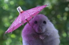 I think a pink umbrella is best for today