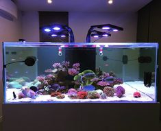 "The ""square"" design to this tank is very cool! It is quite the set-up! ----Photo from Aquarium Set, Coral Reef Aquarium, Saltwater Aquarium Fish, Nano Aquarium, Nature Aquarium, Aquarium Design, Saltwater Tank, Marine Aquarium, Fish Aquariums"