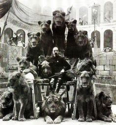 The Lion Tamer of the Russian circus, Captain Jack Bonavita, poses with some of his lions. 1905.
