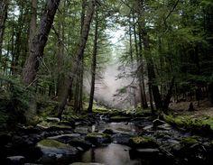 Beaver Brook by Noah Kalina