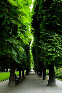 Alley of lush trees under cut with gravel.