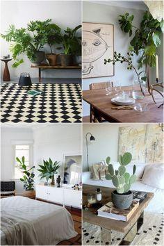 Decoaddict: plantas de interior