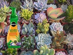 How to Fertilize Succulents - See more at: http://worldofsucculents.com/how-to-fertilize-succulents
