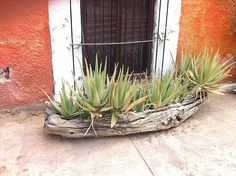 nice planter idea- took this in San Jose Del Cabo