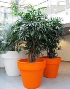 d corez de mani re originale votre int rieur avec des plantes carnivores truffaut plantes. Black Bedroom Furniture Sets. Home Design Ideas