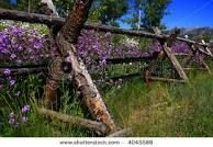 stock photo : Rustic fence