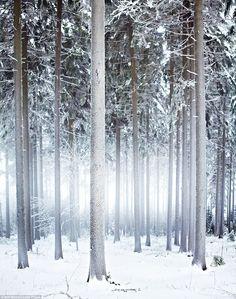 Floresta Turingia, Alemanha